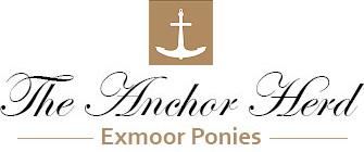Anchor Exmoor Ponies