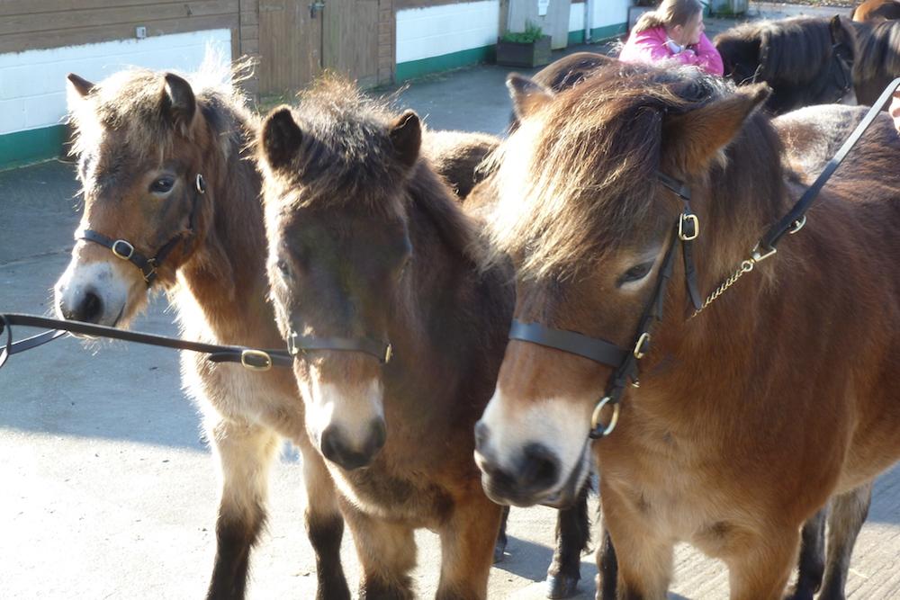 foalshow2