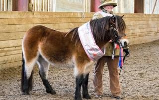Foal Show Supreme