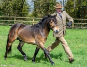 2018stallion parade lordy point toe trot